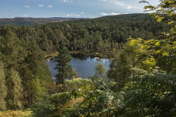 Glen Affric, riserva naturale della Scozia